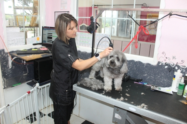 Pawsh Dog House owner Lauren Leeth has been grooming dogs since she was 10, and now she does it professionally. (Jake Magee/Community Impact Newspaper)