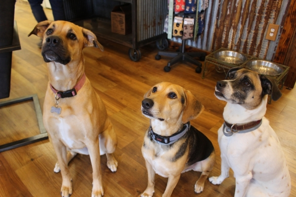 Mia, Graham and Callie often greet customers as they walk in the door of Willow Creek Ranch. (Kara McIntyre/Community Impact Newspaper)