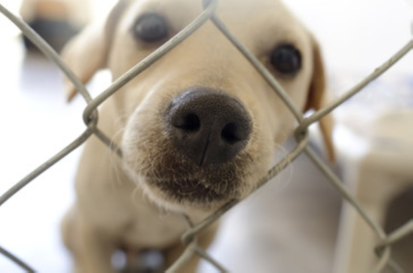 dog putting its snout through a chain link fence