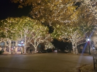 Georgetown was the first city in Central Texas to offer holiday string light recycling. (Ali Linan/Community Impact Newspaper)