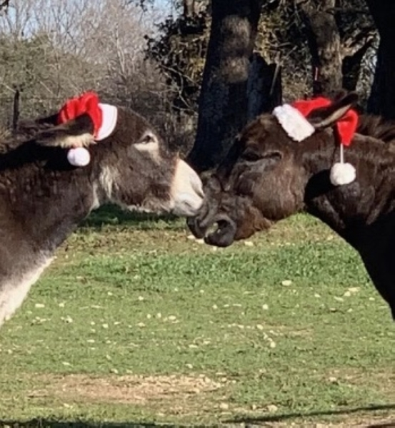 Donkeys Lil Bob and Pedro will be available for Christmas photos at Berry Springs Park and Preserve on Dec. 14. (Courtesy Williamson County)