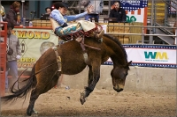 Humble ISD's livestock show is followed by the Humble Rodeo & BBQ Cook-Off event. (Courtesy Humble Rodeo & BBQ Cook-Off)