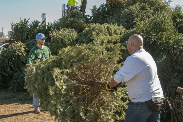 Austin Resource Recovery offers free Christmas tree recycling for residents. (Courtesy Austin Resource Recovery)