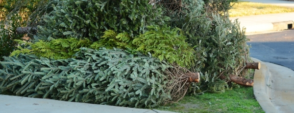 Christmas trees recycling