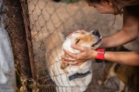 Williamson County Regional Animal Shelter is offering free pet adoption Jan. 2-4. (Courtesy Adobe Stock)
