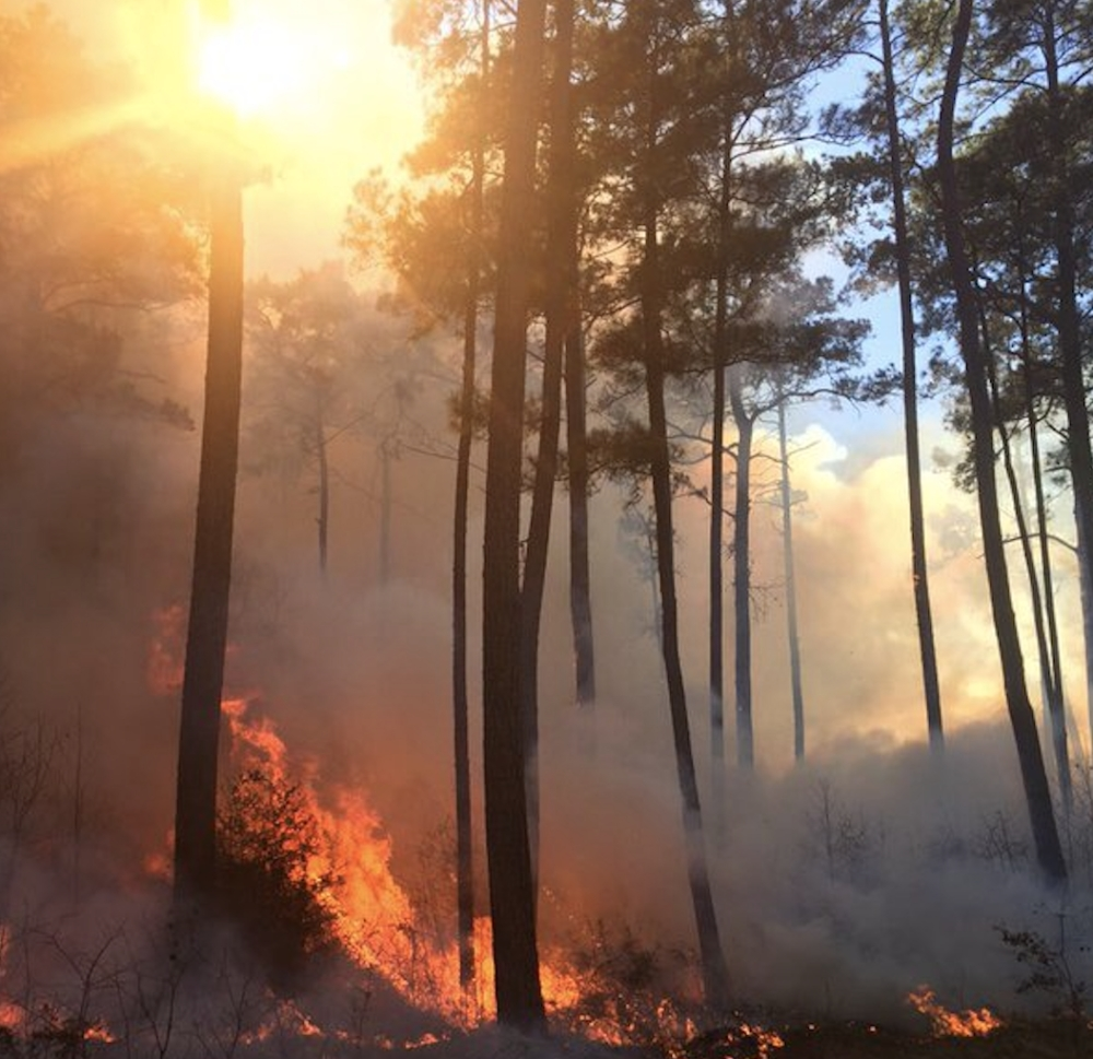 The Texas A&M Forest Service will conduct prescribed burning operations at W. Goodrich Jones State Forest, possibly beginning Jan. 7 through Feb. 29, as weather permits, according to the agency. (Courtesy The Texas A&M Forest Service)