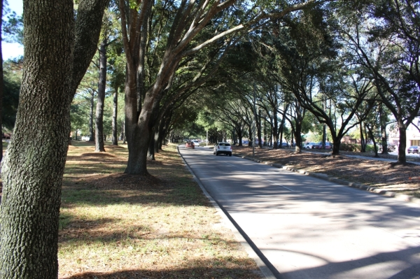 "Kingwood is known as ""the livable forest"" due to its plethora of trees and vegetation. (Kelly Schafler/Community Impact Newspaper)"