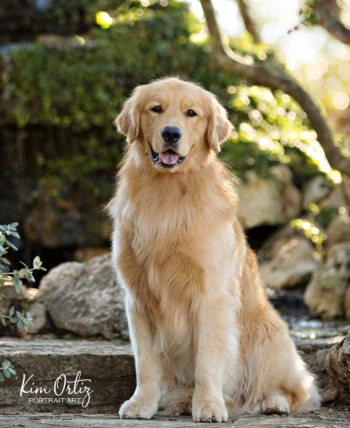 The Kim Ortiz Dog Portraits & Boutique will aim to donate a portion of its studio fees to local animal rescue organizations. (Courtesy Kim Ortiz Portrait Art)