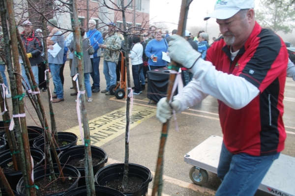Friendswood tree giveaway