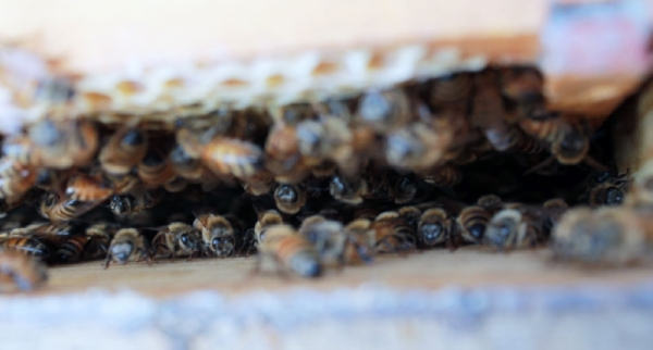 Winding Creek Apiary and Bee Supply Store will host a class for new beekeepers Jan. 25. (Andy Li/Community Impact Newspaper)