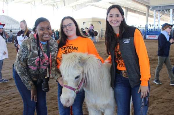 Katy ISD Rodeo livestock show