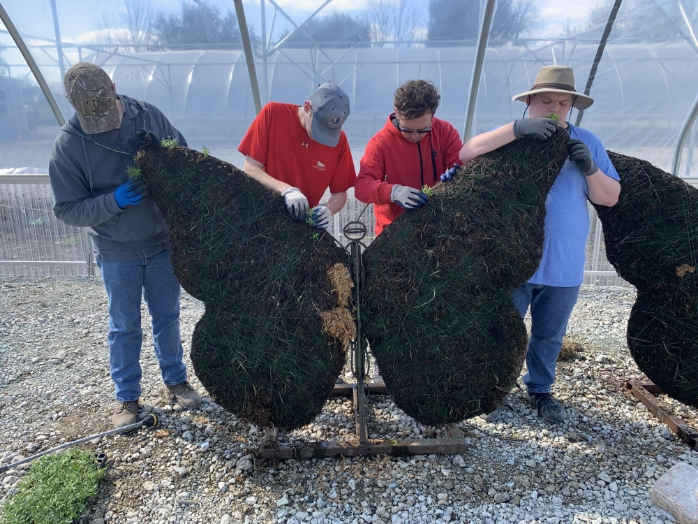Hugs Greenhouse is backing a project, featuring two, four-foot wide topiaries shaped like butterflies. (courtesy Hugs Greenhouse)