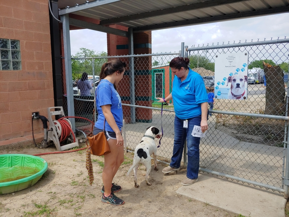 Harris County Animal Shelter has released over 300 animals over the past week by means of transport to other facilities, adoptions or foster ownership, said Eddie Miranda, senior public information officer of Harris County Public Health.  (Courtesy Eddie Miranda)
