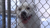 Pet adoptions are up so far in March, the local animal shelter reports. (Courtesy city of Richardson)
