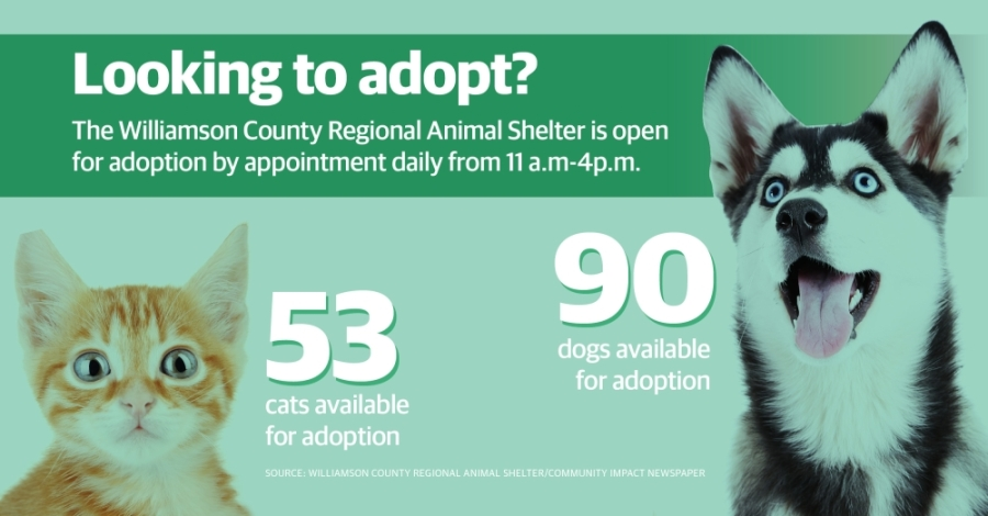 More than 140 dogs and cats are available for adoption at the Williamson County Regional Animal Shelter as of March 31. (Community Impact Staff)