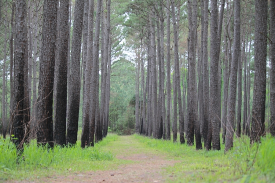 The Texas A&M Forest Service announced April 7 that it would temporarily close William Goodrich Jones State Forest effective April 7 at 5 p.m. (Andy Li/Community Impact Newspaper)