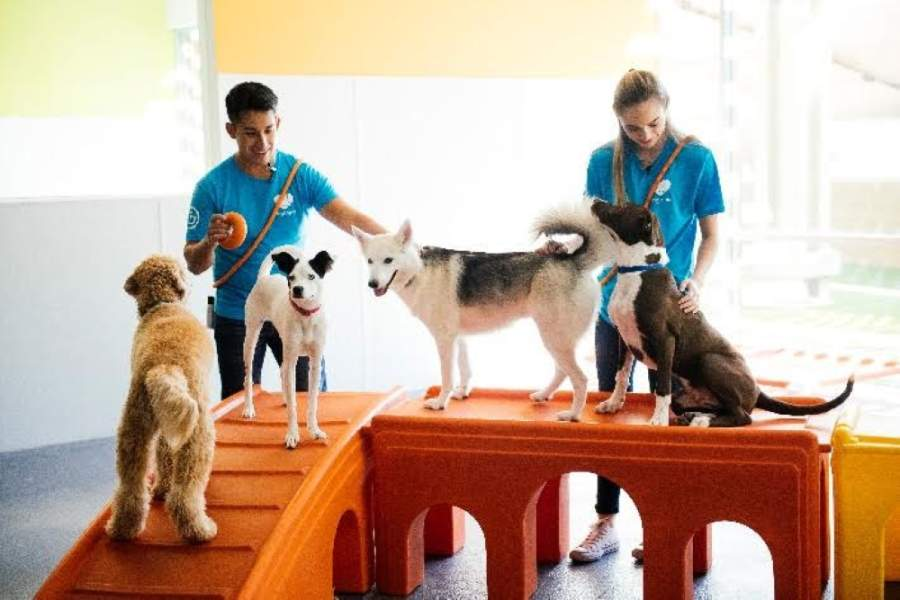The facility would be located on Southlake Boulevard in Southlake. (Courtesy Dogtopia)