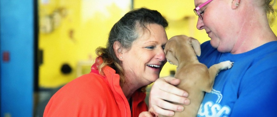 Houston nonprofit Houston PetSet has launched a new program with partners Westbury Animal Hospital and Houston Dog Ranch to provide animal shelter for pets of domestic violence survivors. (Courtesy Houston PetSet)