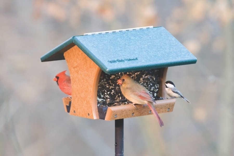 Wild Birds Unlimited specializes in backyard birdwatching. (Courtesy Wild Birds Unlimited)