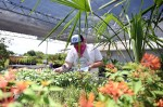Man looking at plants in a greenhouse garden store