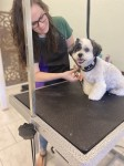 Oodles Pet Grooming