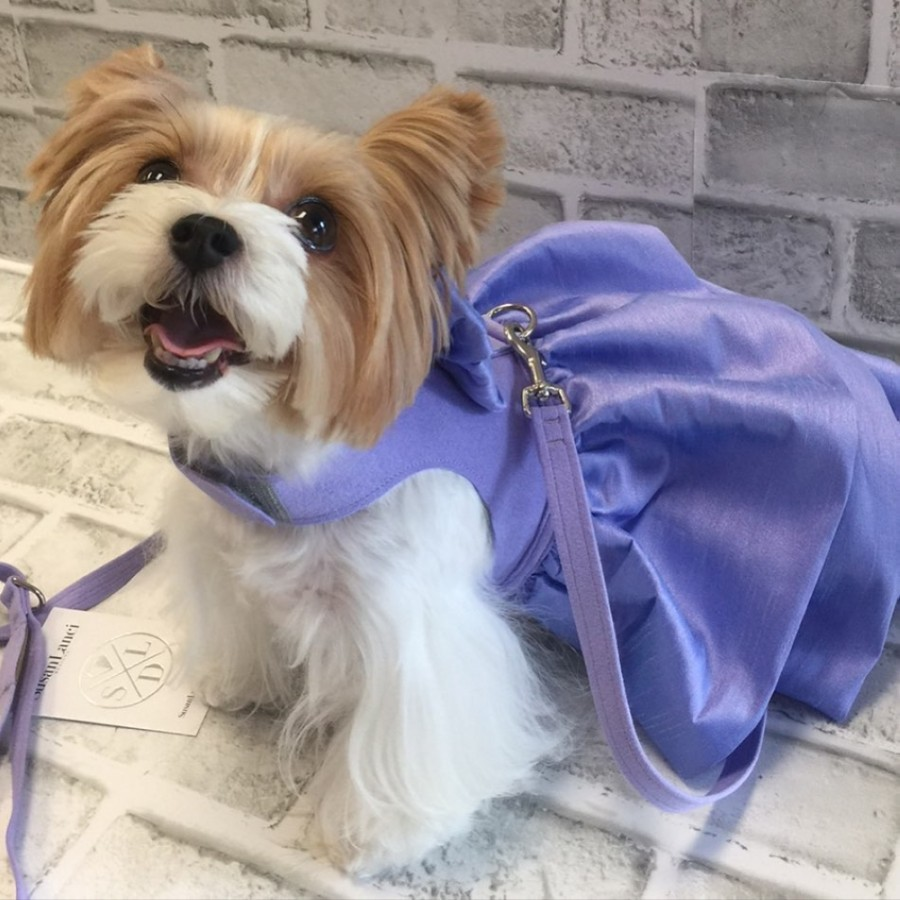 Dog with purple dress and leash