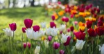 Trying to prepare your garden for a successful season? Here are some tips on how to get started. (Courtesy Adobe Stock)