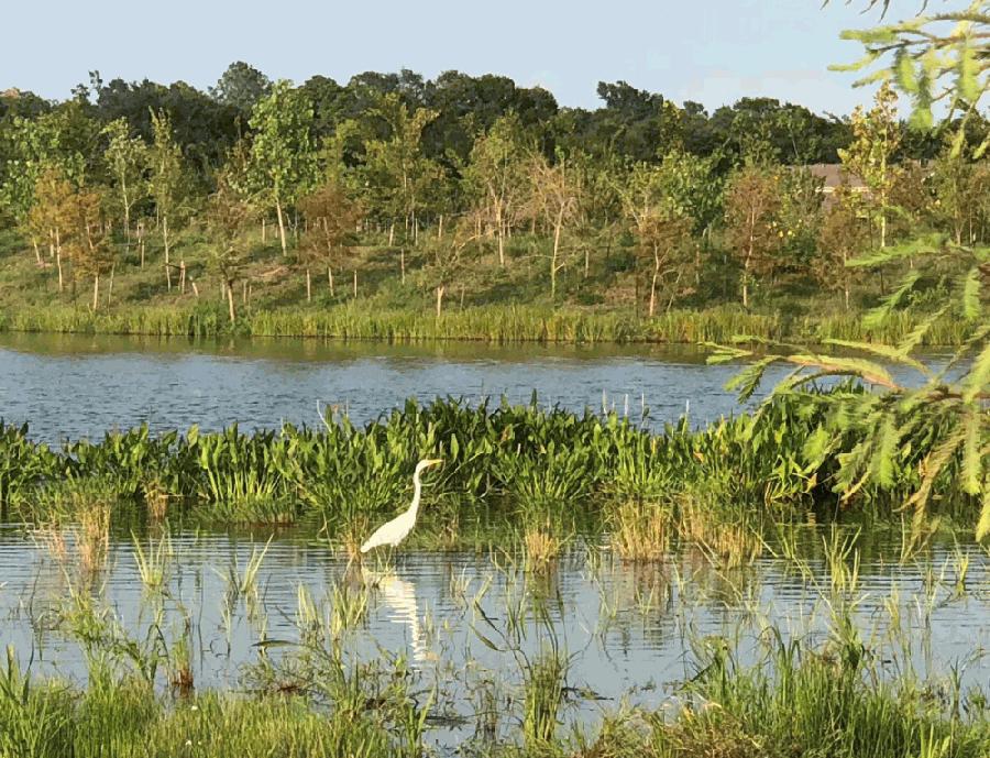 Exploration Green stock image photo bird water nature