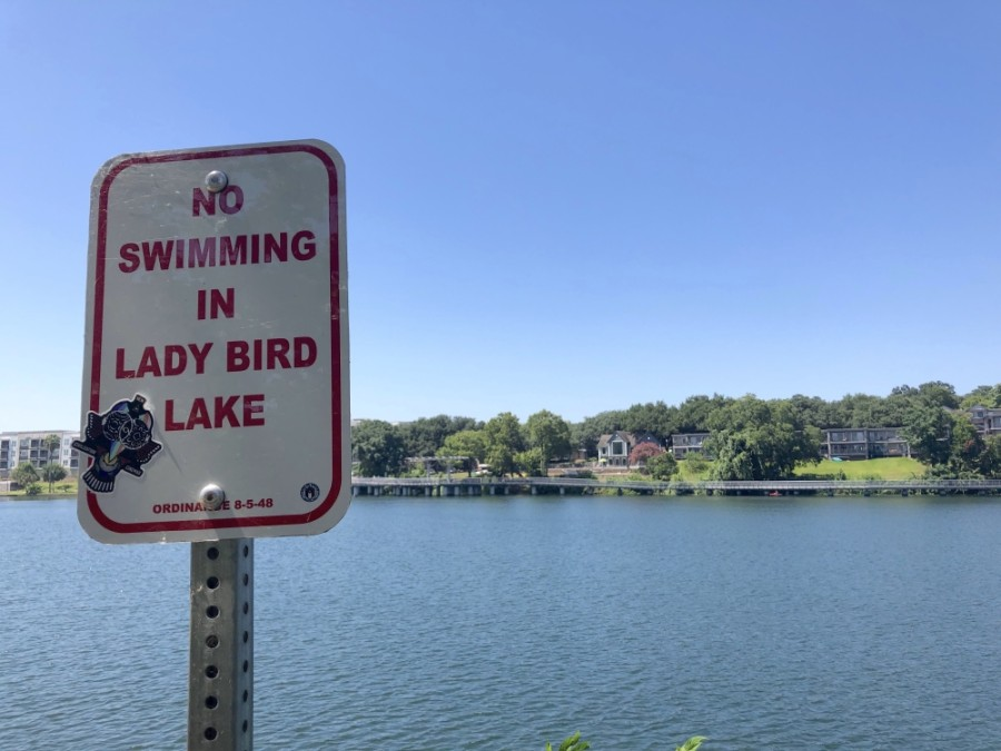 People have not been allowed to swim in Lady Bird Lake since 1964. Algae tested by University of Texas researchers in July have tested positive for a harmful toxin that can be fatal to dogs. (Jack Flagler/Community Impact Newspaper)