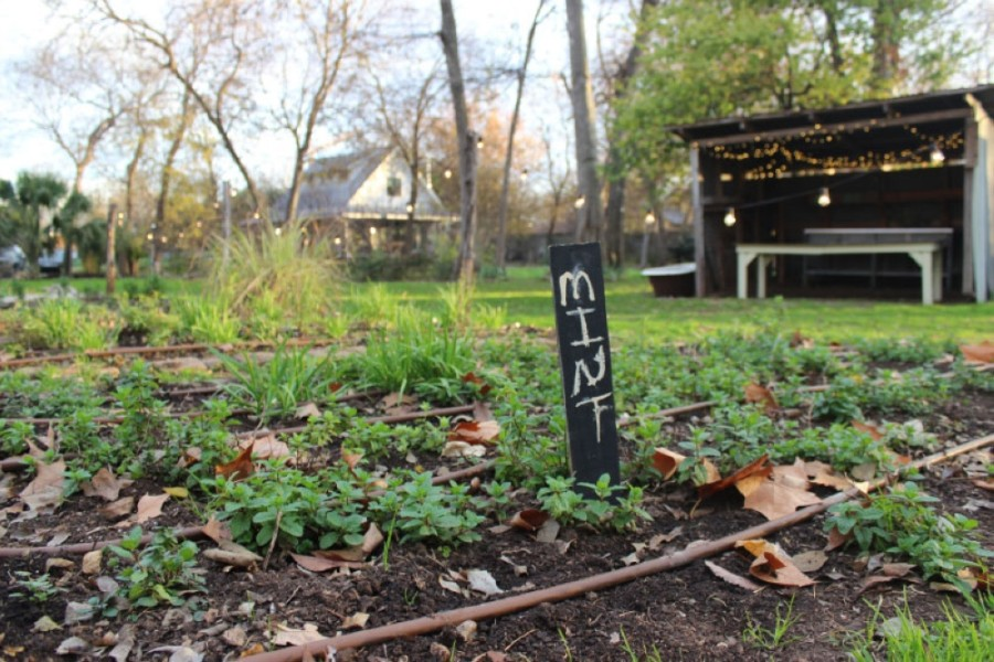 Eden East has moved its farm from East Austin to Bastrop. (Community Impact Newspaper staff)