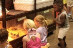 Residents can watch baby chicks hatch via livestream during this year's Williamson County Fair, which will be held virtually. (Courtesy Williamson County Fair)