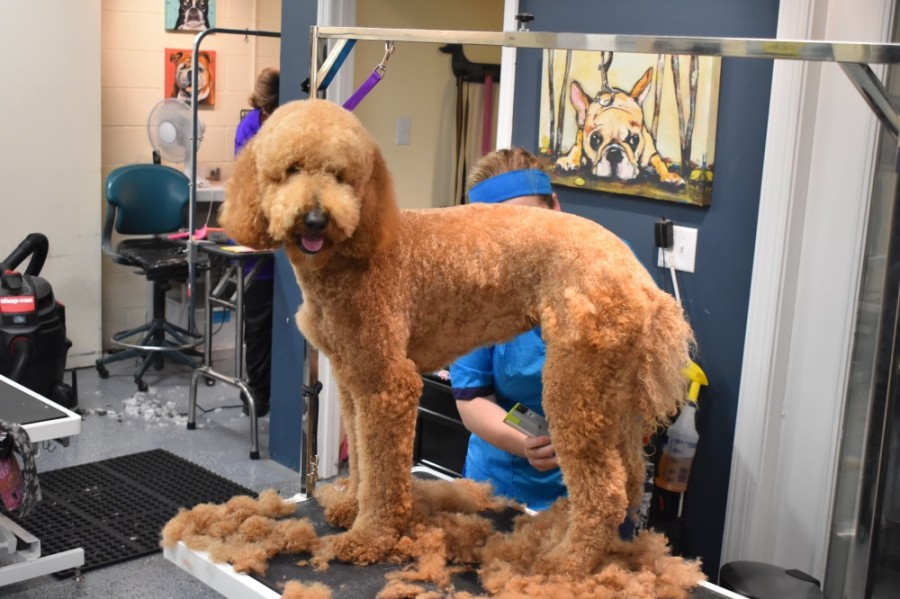 The Pampered Pooch offers a variety of grooming and spa services for dogs of all breeds and sizes as well as doggy day care and boarding services for owners who are out of town. (Photos by Alex Hosey/Community Impact Newspaper)