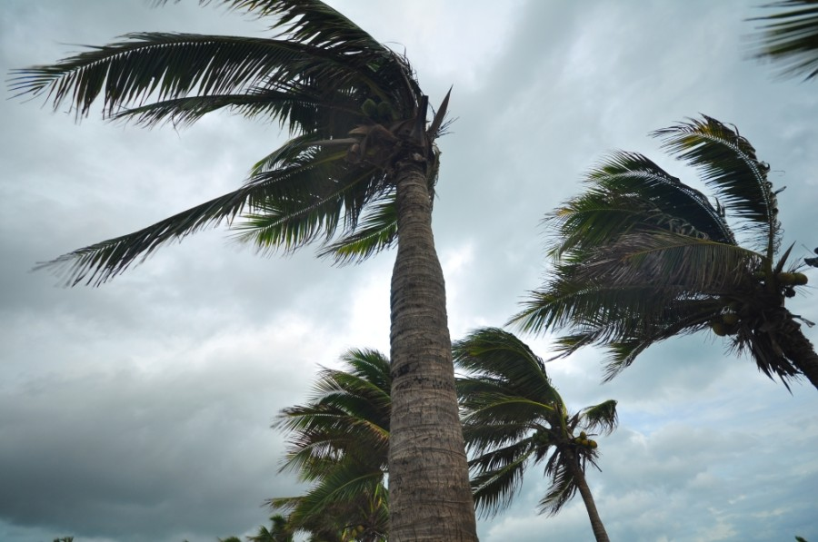 hurricane, storm, wind, trees, palm trees