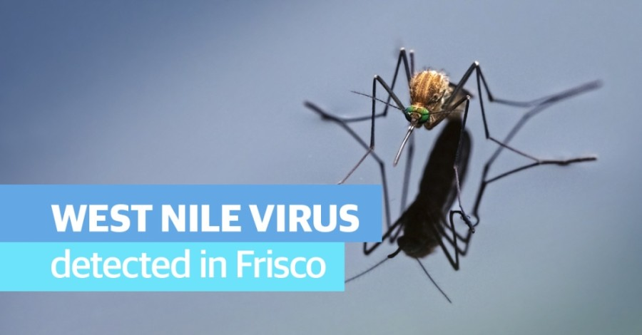 Frisco confirmed that a 10th mosquito pool near the Cottonwood Creek Greenbelt had tested positive for West Nile virus. (Courtesy Adobe Stock)
