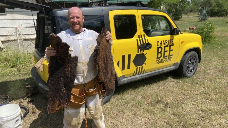 Charlie and his team remove bees from nuisance or dangerous situations. (Courtesy Charlie Bee Company)