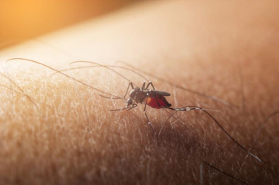 Brushy Creek mosquito traps test positive for West Nile virus. (Courtesy Adobe Stock)