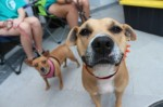 Williamson County Regional Animal Shelter is offering free pet adoptions Sept. 12-13. (Courtesy Adobe Stock)
