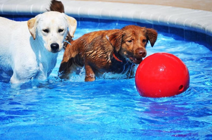 Pet Paradise opened its Georgetown location Sept. 30. (Courtesy Pet Paradise)