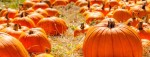 October events in The Woodlands area include a fall festival in Oak Ridge North. (Courtesy Fotolia)