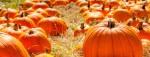 October events in The Woodlands area include a fall festival in Oak Ridge North. (Courtesy Fotolia)