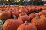 Rockbridge Church is hosting an outdoor, socially-distanced pumpkin patch in Cedar Park with a variety of pumpkins and gourds for sale. (Courtesy Rockbridge Church)