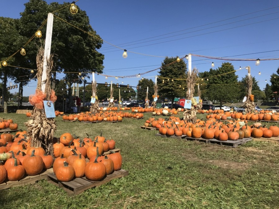 The Cooper Trooper Pumpkin Patch opened Oct. 5. (Wendy Sturges/Community Impact Newspaper)