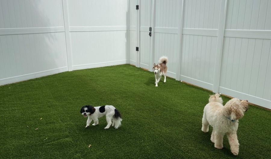 Dogtopia in McKinney recently unveiled a new outdoor area for dogs to enjoy. (Courtesy Dogtopia of McKinney)