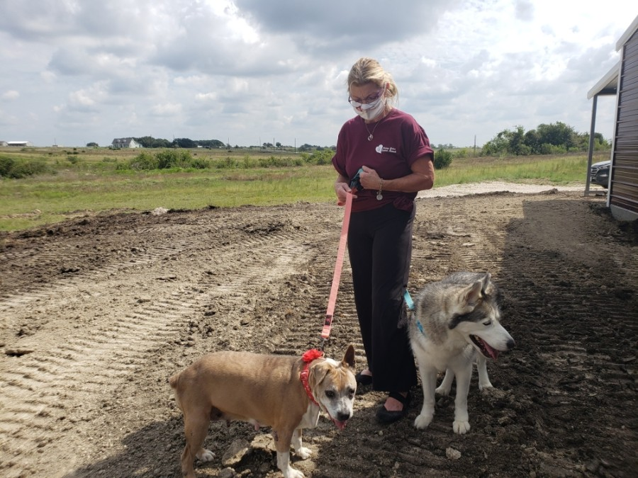 After noticing the number of senior dogs in local animal shelters, founder Rhonda Minardi decided to buy land to house them. (Ali Linan/Community Impact Newspaper)