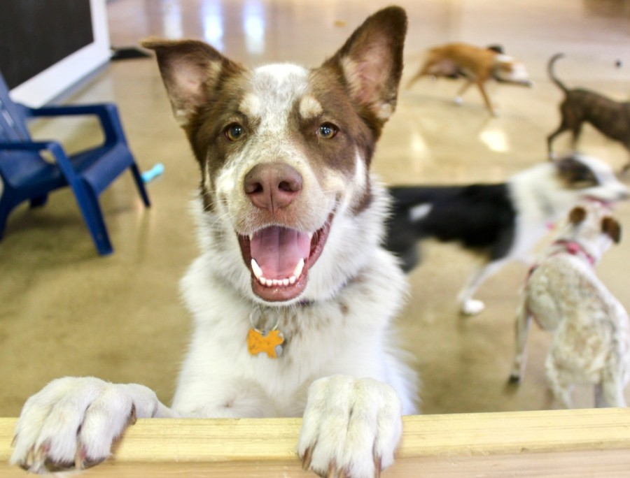 PetSuites opened a new location in Fort Worth on Oct. 13. (Taylor Jackson Buchanan/Community Impact Newspaper)
