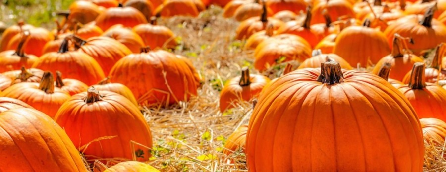 October events in the Cy-Fair area include fall festivals and pumpkin patches. (Courtesy Fotolia)