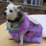 Teach your dog to strike a pose and prepare to vote for the most fabulous furry friend with Pflugerville's Second Annual Pawject Runway. (Courtesy Pflugerville Public Library)