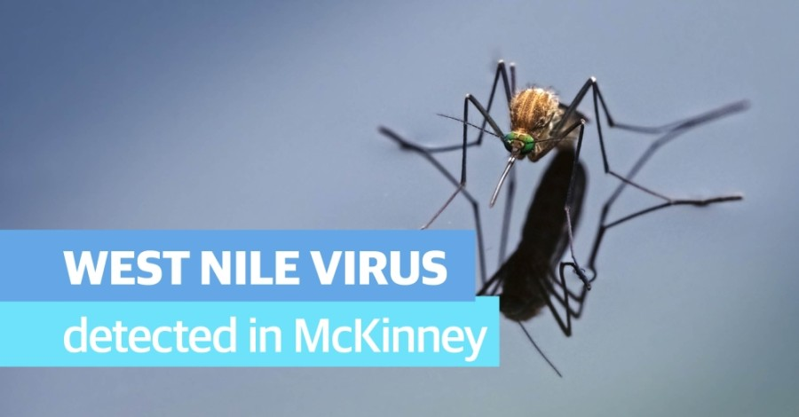 The city of McKinney will spray a portion of the city that had a mosquito pool test positive for West Nile Virus. (Community Impact staff)