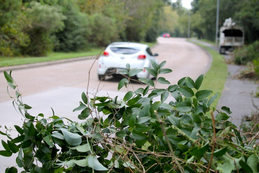 Workers will be removing the Kudzu vines from the Northpark Drive area until Oct. 31. (Andy Li/Community Impact Newspaper)