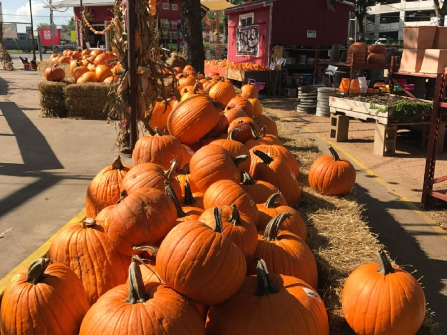 "Enjoy some fall-themed activities and eat your weight in candy this Halloween with five ""spooktacular"" Halloween events in Round Rock, Pflugerville and Hutto. (Community Impact Newspaper staff)"